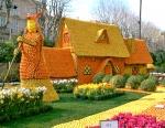 Цитрусовый фестиваль
